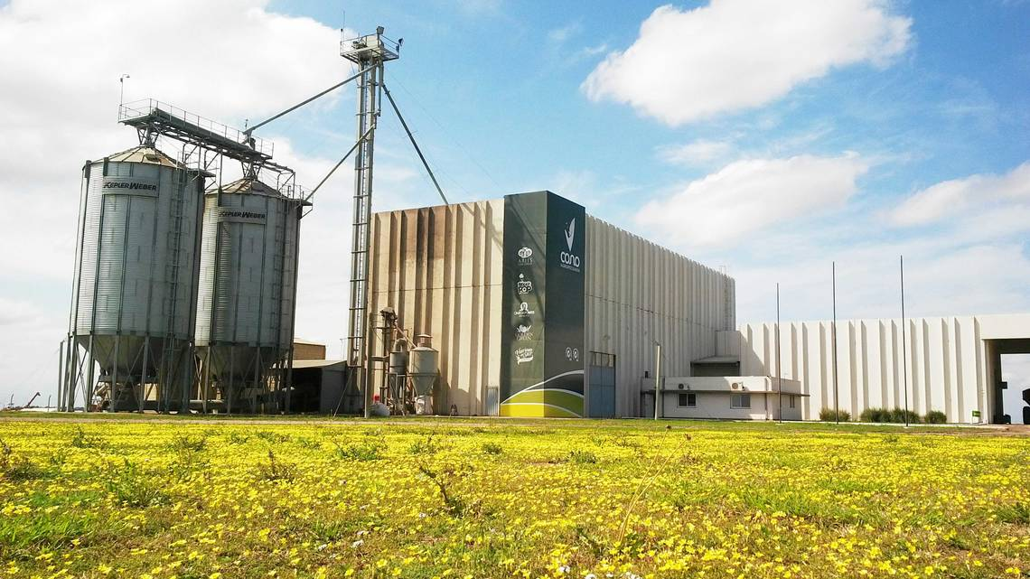 In 2010, Cono built a modern plant for processing speciality crops like chickpeas.